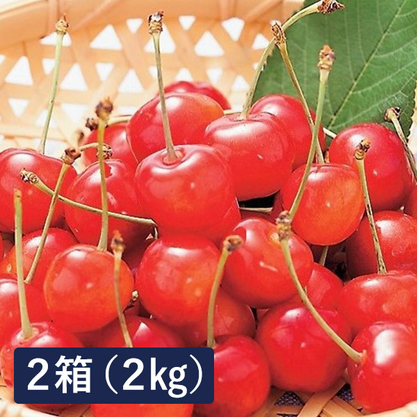 JA天童フーズ 訳あり さくらんぼ佐藤錦 1セット 2kg(1kg×2箱)