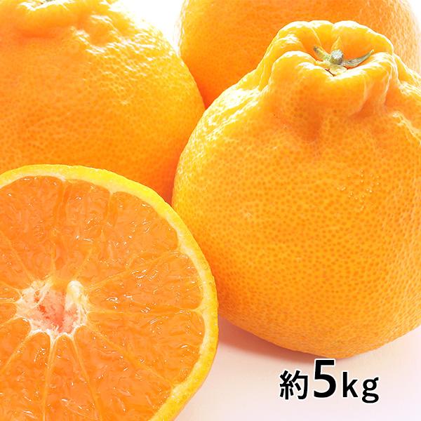 おぐま屋 熊本県産 デコポン5kg