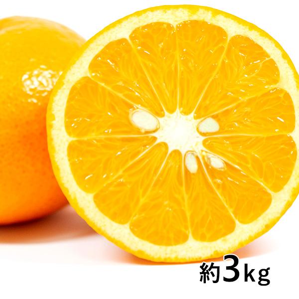 おぐま屋 熊本産 秀品 甘夏 約3kg