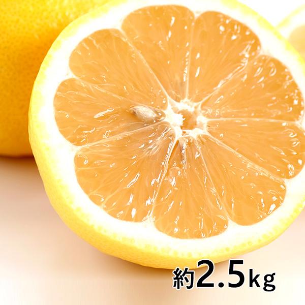 おぐま屋 宮崎産 秀品 日向夏 約2.5kg